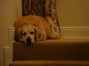 Cody on the stairs.