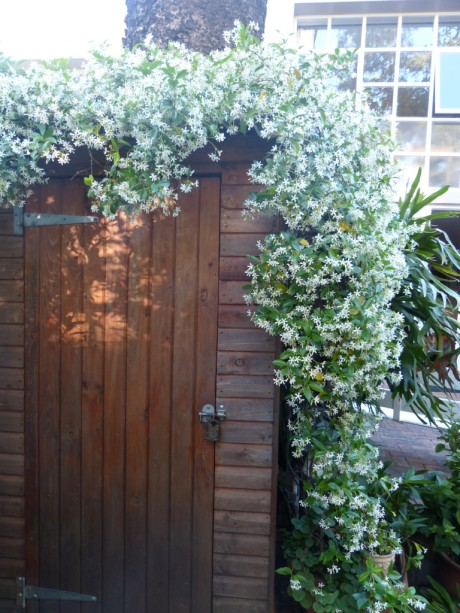 Garden shed in Bridal gear
